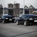 фото Mustang GT500 & GT